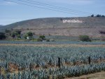 Blue agave fields near Tequila